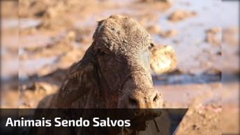 Os Salvamentos De Animais Mais Impressionantes Já Registrados!