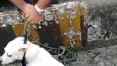 Policial Salvando Cachorro Que Estava Preso Em Um Ribeirão, Confira!