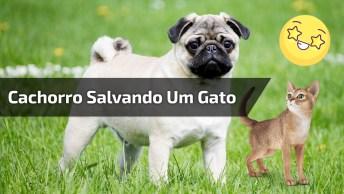Cachorro Salvando Um Gato Que Caiu Em Um Buraco, Que Cena Linda!