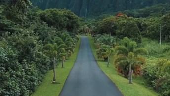 Estrada No Havaí, Veja Que Lugar Lindo Rodeado Por Natureza!