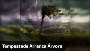 Força Do Vento De Uma Tempestade Arrancando Uma Árvore Do Chão!