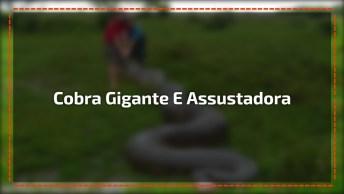 Impressionante O Tamanho Dessa Cobra Aqui No Brasil, Compartilhe!