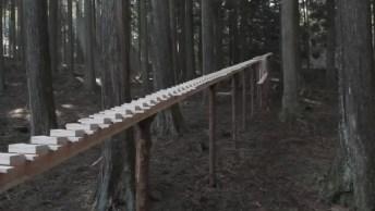 Veja A Grande Arte De Sons Feito Em Uma Floresta No Japão! É Incrível!