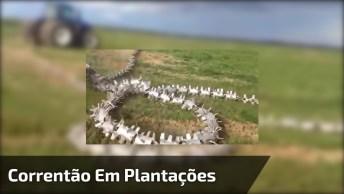 Correntão Em Plantações, Nova Técnica Para Cobrir As Sementes!