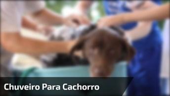 Tutorial De Como Fazer Um Chuveiro Para Dar Banho Em Seu Cachorro, Confira!