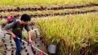 Veja Como É Feita A Colheita De Arroz Na China! Muito Legal!