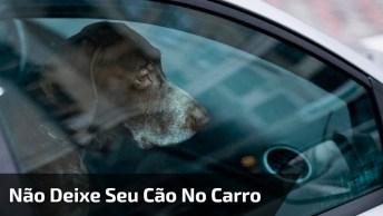Vídeo Muito Interessante! Não Deixe Seu Cãozinho Esperando No Carro!