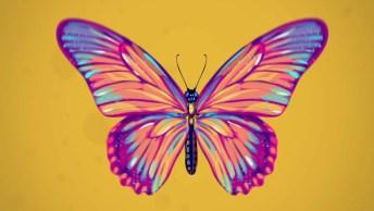 Você Sabe Quanto Tem Vive As Especies? Confira Este Vídeo Muito Interessante!