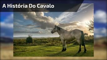 A História Do Cavalo, Nunca Desista Mesmo Quando Tudo Parecer Perdido!