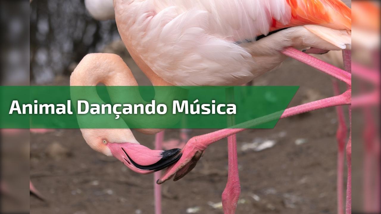 Animal dançando música