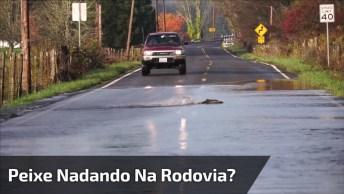 Ao Dirigir Nas Rodovias, Tome Cuidado Para Não Atropelar Os Peixes Kkk!