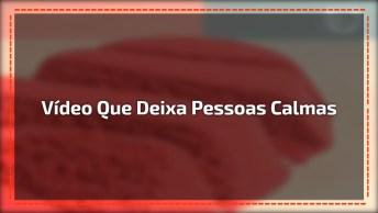 As Imagens Deste Vídeo Deixa Várias Pessoas Calmas, Confira!