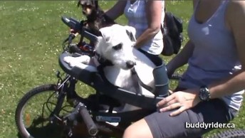 Assento De Bicicletas Para Cachorros, Eles Vão Adorar A Novidade!