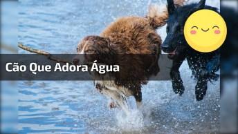 Cachorrinho Que Adora Água, Olha Só Que Legal Ele Se Divertindo Na Água!