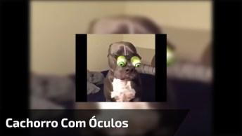 Cachorro Com Óculos Engraçados, Kkk! Muito Engraçado, Kkk!