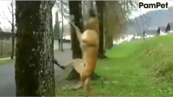 Cachorro Inventando Brincadeira Com Galho De Árvore, Será Que Ele Tem Problema?
