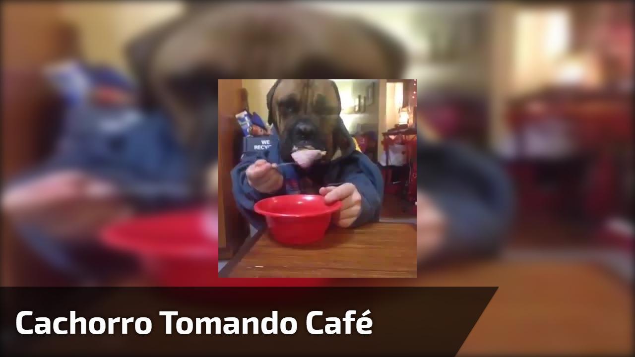 Cachorro tomando café