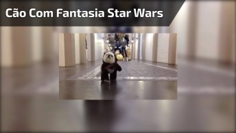Diretamente De Star Wars Um Ewoks, Só Que Não, Kkk! Mas Ficou Muito Fofinho!