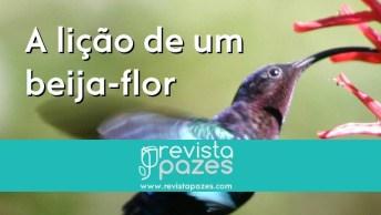 História Do Beija-Flor, Que Posamos Refletir Com Esta Belíssima História!