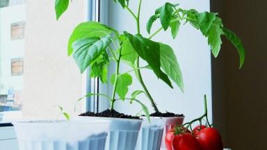 Ideias De Plantio Para Você Fazer Em Casa, Com Legumes Estragados!