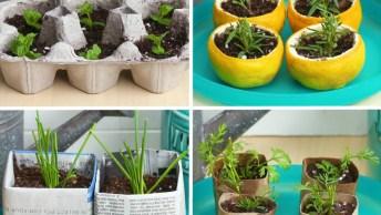Ideias Super Legais Para Plantar As Sementes Antes De Ir Para Os Vasos, Ou Terra