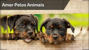 Imagens Lindas Que Apesar De Tanta Matanças, Ainda Há Amor Pelos Animais!
