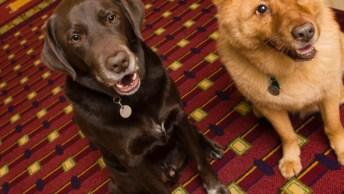 Incrível Resposta Que Um Dono De Um Cachorro Levou De Um Dono De Hotel!