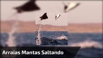 Incrível Vídeo Mostrando Uma Cena Rara De Arraias Mantas Saltando No Mar!