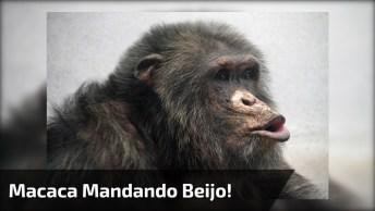 Macaca Mandando Beijo, Envie Para Seus Amigos E Amigas Do Whatsapp!
