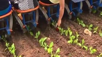Maquina Que Ajuda No Plantio No Campo, Muito Legal Da Só Uma Olhada!