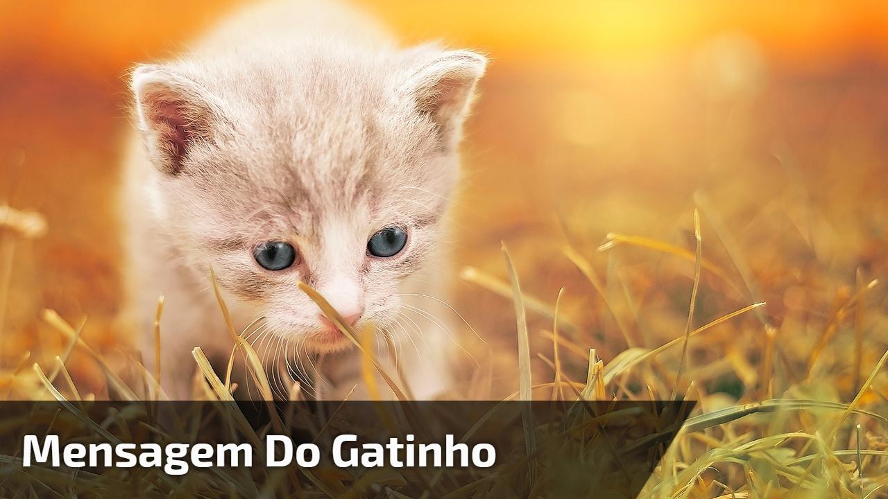 Mensagem do gatinho