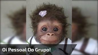 Mensagem Fofinha Para Enviar Para Os Grupos Do Whatsapp, Confira!