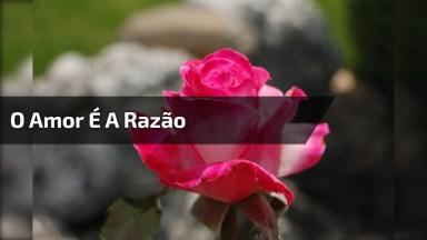 Mensagem O Amor É A Razão, A Busca E A Coragem, Compartilhe No Facebook!