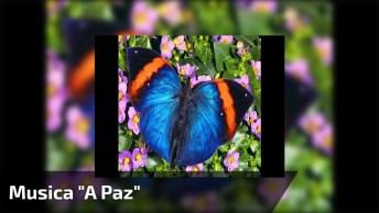 Musica 'A Paz' Cantada Por Daniel, Compartilhe No Facebook Com Seus Amigos!
