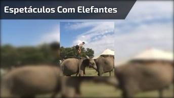 Olha O Que Eles Fazem Com Os Elefantes, É Fantástico, Confira!