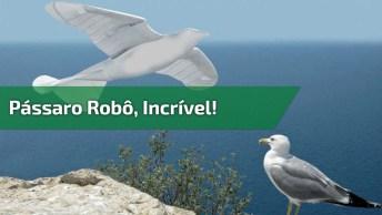 Olha Só Que Legal Este Pássaro Robô, Simplesmente Fantástico!