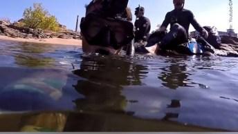 Olha Só Que Legal O Que Este Mergulhador Faz, Esta De Parabéns!
