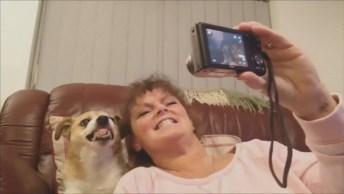 Que Cachorro Simpático, Kkk! Veja Só Ele Sorri Pra Tirar Fotos!