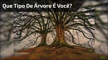 Que Tipo De Árvore É Você? Um Áudio Que Muitas Pessoas Precisam Ouvir!