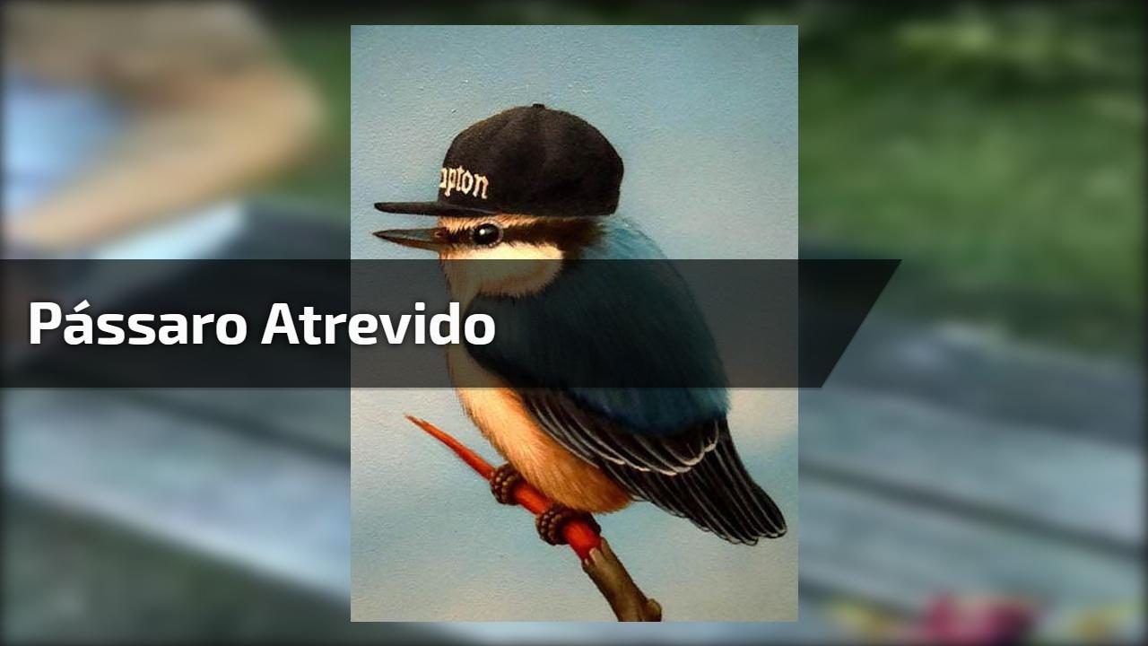 Pássaro atrevido