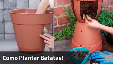 Tutorial De Como Plantar Batatas! Olha Só Que Legal Este Vídeo!