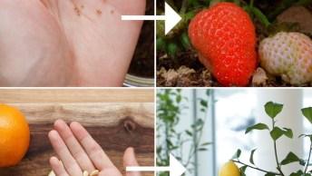 Tutorial De Como Plantar Legumes E Frutas, Vale A Pena Conferir!