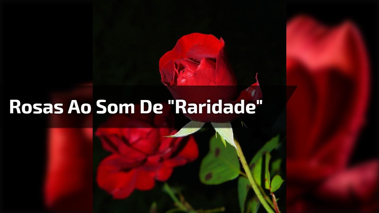 """Um lindo vídeo com as mais belas rosas ao som de """"Raridade"""" de Anderson Freire!"""