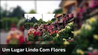 Um Lugar Muito Lindo Com Muitas Flores, Um Vídeo Muito Legal!