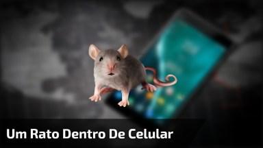 Um Rato No Whatsapp, Alguém Sabe Como Tirar Ele? Kkk Confira!