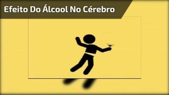 Veja Como É O Efeito Do Álcool No Cérebro, Muito Legal, Confira!
