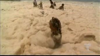 Veja Esse Mar De Espuma Que Virou Diversão Para Os Banhistas!
