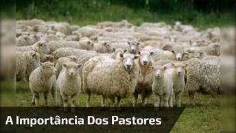 Veja Só O Que Acontece Quando As Ovelhas São Chamadas Sem Ser Pelo Seu Pastor!