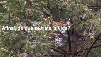 Vídeo Com Mensagem Sobre O Sentido Da Vida, Sera Que Existe Algum?