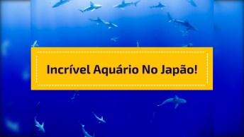 Vídeo Mostrando Um Doa Maiores Aquários Do Mundo Que Fica No Japão!